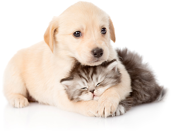 Pet Store & Pet Grooming Clearwater, Florida